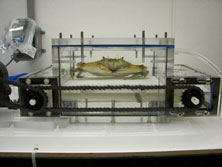crab on a treadmill